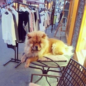 Lion Dog in Itaewon