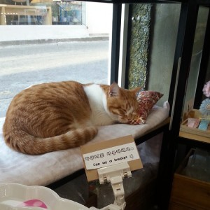 Snoozing Kitty in an Accessory Store