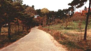 Pathway from Iljumun to Hongyemun